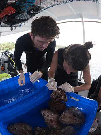 selecting the right rocks to plant the coral on