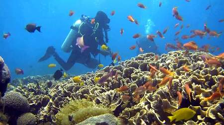 The reefs in the shallower parts of the dive sites are very colourful and full of fish. And the water is warmer.