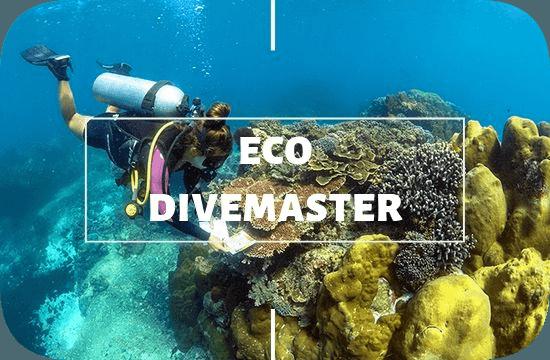 Divemaster Eco Internship Nusa Lembongan