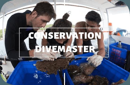 Divemaster Conservation Course Nusa Lembongan